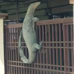 Monitor lizard Crocodile climbing over front gate meme template