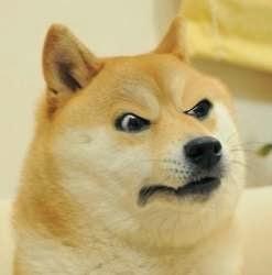 Angry raised eyebrows Doge meme template